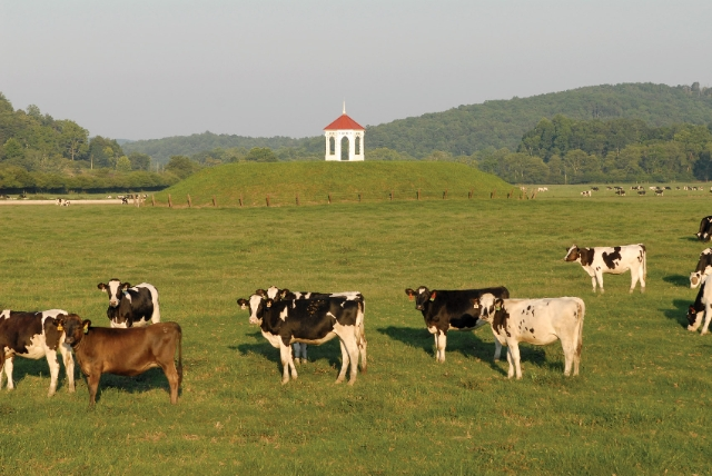 cows-gazebo-indian-mound